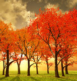 Beautiful autumn Stock Photos