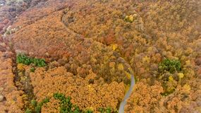 Beautiful autumn from above. Drone flight over a forest in the late autumn, Bulgaria stock image