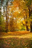 Beautiful autumn alley in the park. Yellow and orange trees. Sunny autumn landscape royalty free stock photos
