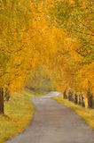Beautiful autumn alley and road Royalty Free Stock Image