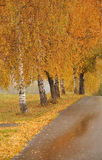 Beautiful autumn alley and road Royalty Free Stock Photography