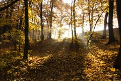 Beautiful autumn Stock Photography