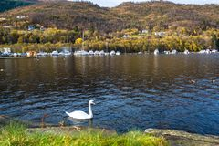 Autumn Landscape with A White Swan Swimming in A Fjord, Resting Canoes and Colorful Trees on Mountains royalty free stock photography