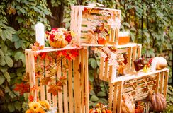 Beautiful autumn. Autumn scenery in nature. Apples and orange pumpkins Royalty Free Stock Photo