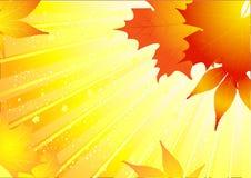 Beautiful autumn background Stock Image