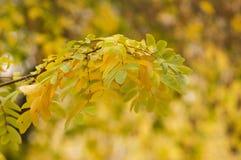 Beautiful autumn background Stock Photography