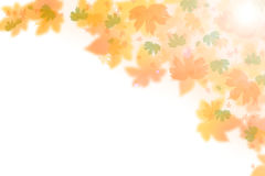 Beautiful autumn background. Beautiful colorful autumn on a white background Stock Image