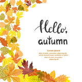 Beautiful autumn background with falling leaves. Place for text. Hello Autumn vector illustration Royalty Free Stock Image