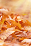 Beautiful autumn background Stock Images
