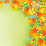 Beautiful autumn background with leaf fall Stock Photo
