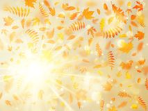 Beautiful autumn background with maple autumn leaves and delicate sun. EPS 10 vector illustration