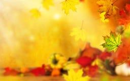 Beautiful autumn background Royalty Free Stock Photos