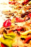 Beautiful autumn background with maple leaves close up. Colorful Royalty Free Stock Photo