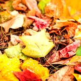 Beautiful autumn background with maple leaves close up. Colorful Stock Photo