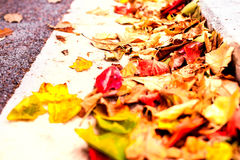 Beautiful autumn background with maple leaves close up. Colorful Royalty Free Stock Images