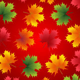 Beautiful autumn background with maple leaves. On red vector illustration