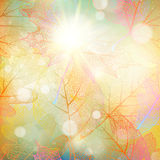Beautiful autumn background with sun. EPS 10. Vector file included Stock Photography