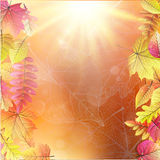 Beautiful autumn background with sun. EPS 10. Vector file included Stock Image