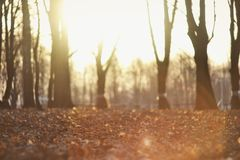A Beautiful Autumn Background With Sunshine royalty free stock photos