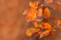 Beautiful autumn background with warm shades of orange. Yellowed Stock Image