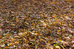 Beautiful autumn background of yellow leaves on the ground. A Beautiful autumn background of yellow leaves on the ground Royalty Free Stock Images