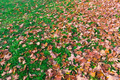Beautiful autumn background of yellow leaves on the ground Stock Photo