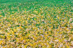 Beautiful autumn background of yellow leaves on the ground Stock Photos