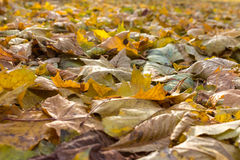 Beautiful autumn background of yellow leaves on the ground Royalty Free Stock Photo