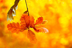 Beautiful autumn backgroung Royalty Free Stock Photo