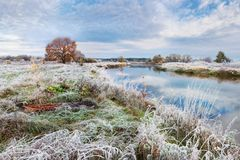 Beautiful Autumn Belarusian Landscape: A Grass Covered With A Thick Layer Of Frost, A Small River And A Lone Orange Oak On The Sho stock images