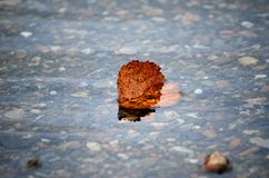 Beautiful autumn birch leaf stuck in cold river current. Macro photo stock photography