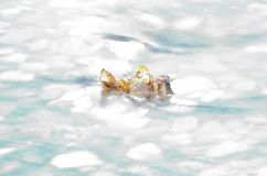 Beautiful autumn birch leaf stuck in cold river current. Macro photo royalty free stock photos