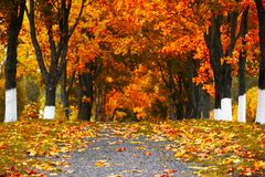 Beautiful autumn city landscape, russia, park, golden color. Beautiful autumn city landscape, europe Royalty Free Stock Image