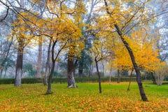 Beautiful autumn city park. Stock Image