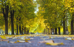 Beautiful autumn city park with trees and benches. Landscape. Walkway Stock Images