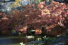 Beautiful autumn color Royalty Free Stock Photography