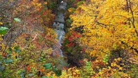 Beautiful autumn color of foliage at the mountain in Naruko Gorge