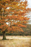 Beautiful Autumn color in forest Royalty Free Stock Image