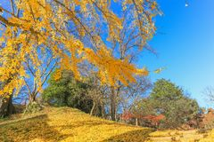 Beautiful autumn color trees  of Ueda  Park in Nagano Prefecture. Japan Stock Photo