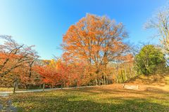 Beautiful autumn color trees  of Ueda  Park in Nagano Prefecture. Japan Stock Photos