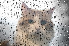 The cat behind a wet window royalty free stock photos