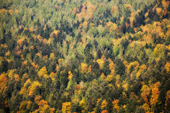 Beautiful autumn colorful woods landscape Royalty Free Stock Photo