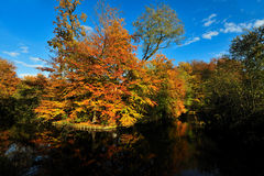 Beautiful autumn colors Stock Photography