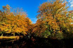 Beautiful autumn colors Royalty Free Stock Images
