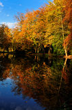 Beautiful autumn colors Stock Images