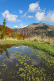 Beautiful autumn colors in alpine pond Stock Image