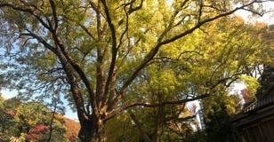 Beautiful autumn colors in Japanese garden Stock Image