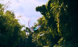Soap bubbles floating in the air Royalty Free Stock Photography