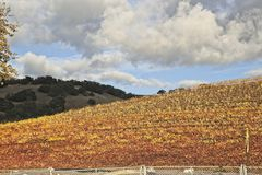 Clouds over the colorful vineyards royalty free stock photos