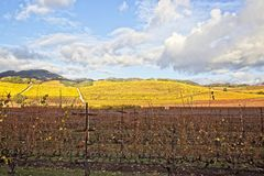 Rain clouds over beautiful yellow vineyard landscape stock photo